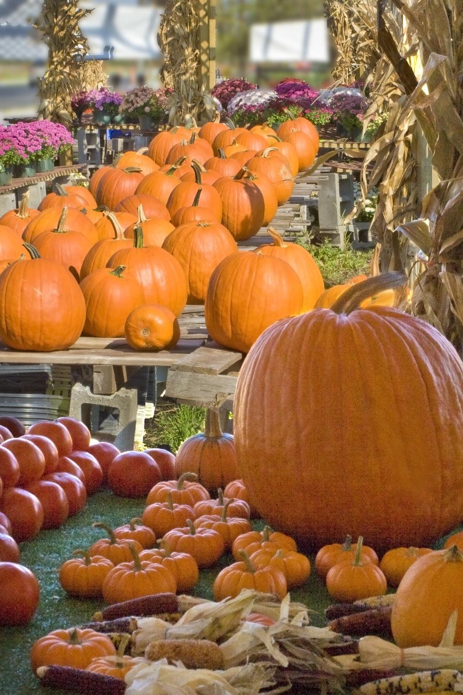 Pumpkin stand.jpg