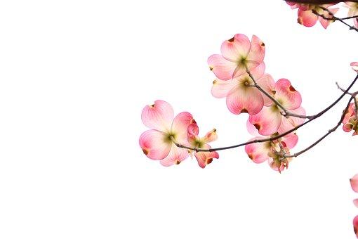 flowers-2642258__340.jpg