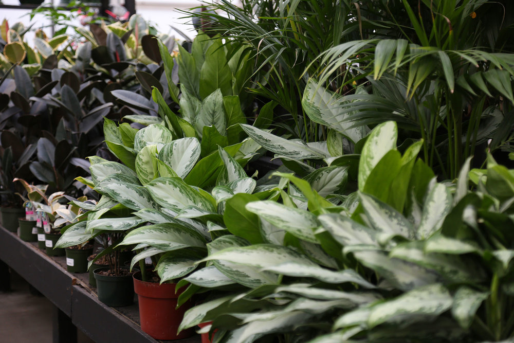 Houseplants - Create a tropical paradise in your home and office.