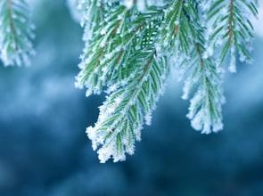 fr_winter.jpg