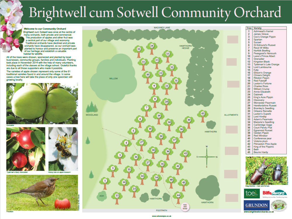 Brightwell Orchard.PNG