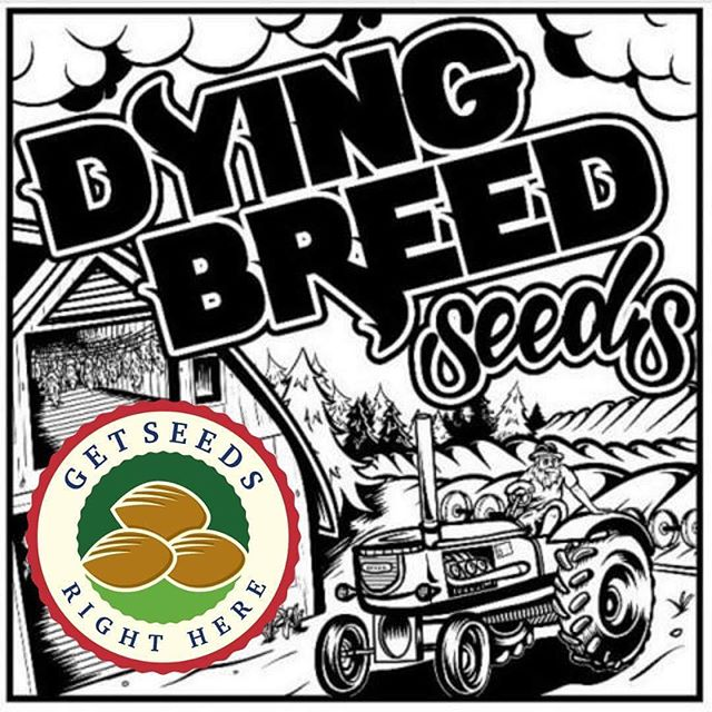 Dying Breed available on the website. http://getseedsrighthere.com . . 4 Loco's. Banana Ripple. Blue Dogstar. Cali Black Roze. Cinnabom. Cookie Stomper. Dirty Shirley. Dog Fart. Double Lemon Gucci. Gas n Fruit. God Lemon. Gum ball. Ice Cream Bean. Love Muffin. Melon Chunks. Melon Jelly. Mendo Roze. Moonshine Breath. Muffinz. Red Roze. SFZ. Sour B. Sour Jamaican Lime. Sour Zkittlez. Z Money. . #getseedsrighthere  #dyingbreedseeds  #3rdgenfamily