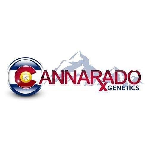 Just loaded a bunch of Cannarado's TK91 line on the website... getseedsrighthere.com. .