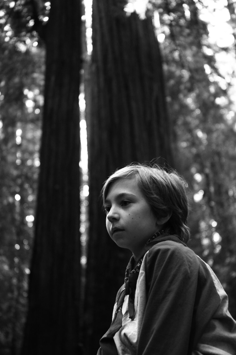 Nolan, Big Hendy Grove, California 2018