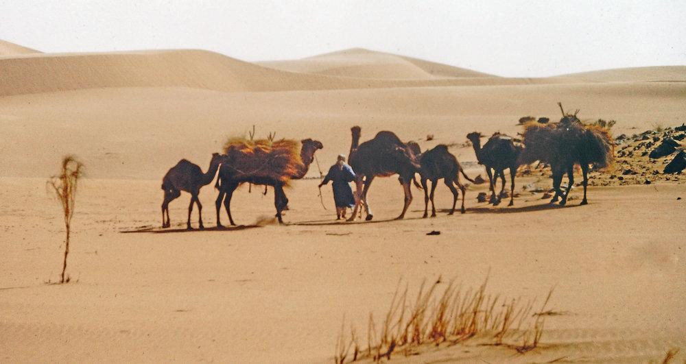 Sahara 1977