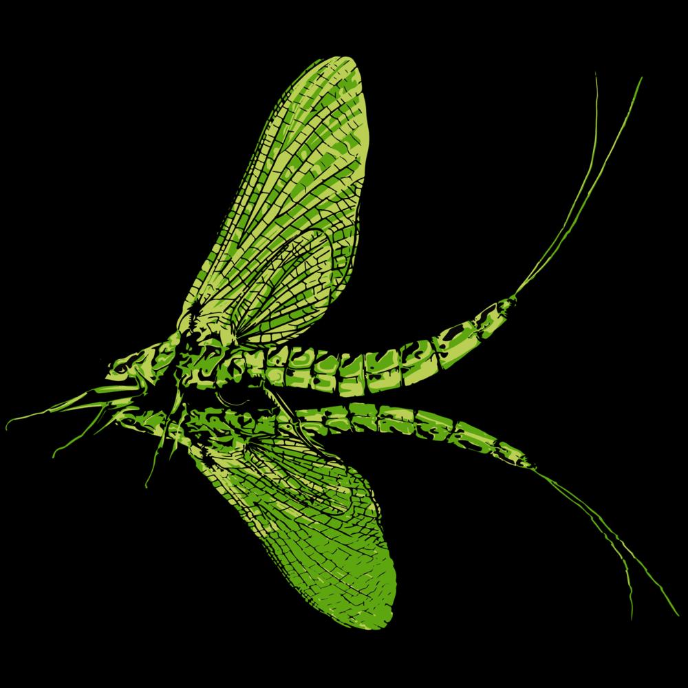 2018-green-drake-3.png