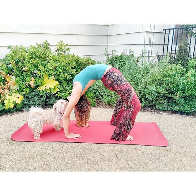 *note this is downward dog pose, this is kissing dog pose :-*