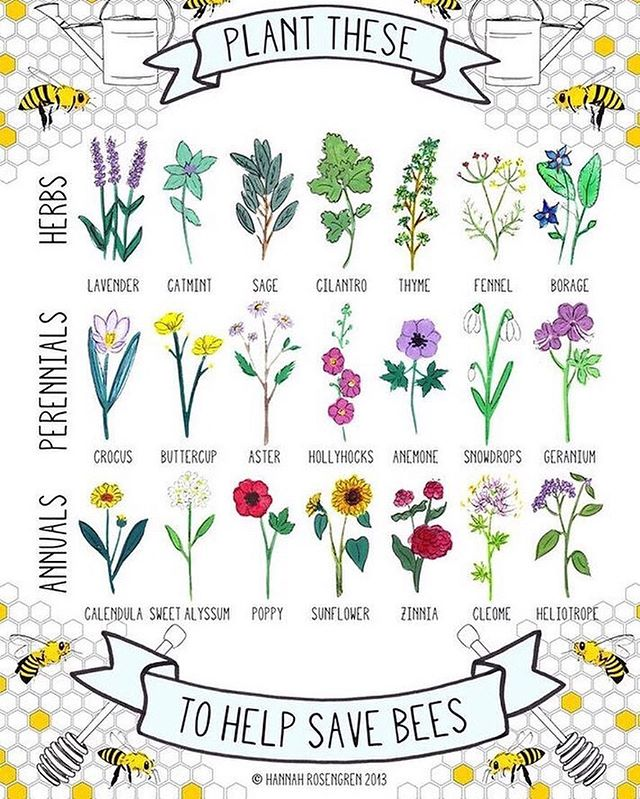 Spring energy in the house! These lovely signs of spring help save the bees. 💕🐝🌱🌸💫 . . . . 🖊 @hannah_rosengren_studio  #firstdayofspring . . . #organic #organiccotton #metawear #liveorganic #fashionrevolution #cradletocradle #ecofashion #madeintheusa #recycled #farmtofashion #organiclife #sustainablefashion #ethicalfashion #ecorenaissance #mindbodygram #nontoxicliving #mindfuleating #mindfullymade #sustainability #coolandconscious #consciousness #consciouscommerce #consciouscommunity #consciousconsumer