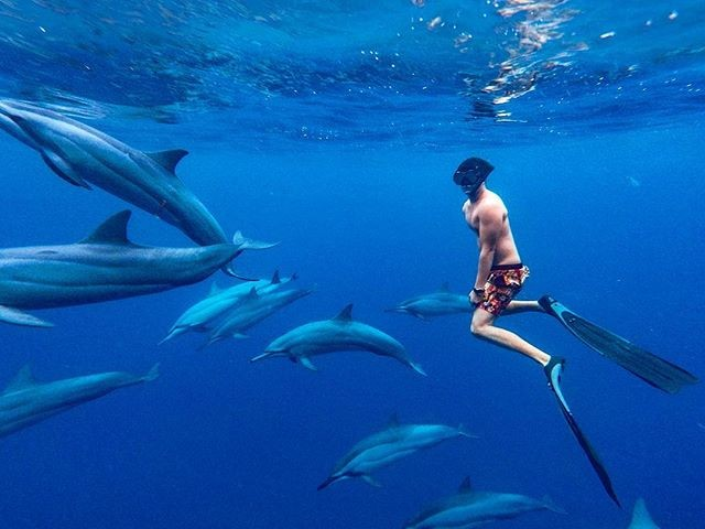 As free as the ocean 🐬🐬🐬 . 📸 by @vitamin_sea_ltd_mauritius @oursandyfootsteps . . . . . . #adventure #weekend #mauritius #wanderlust #summer #instatravel #travel #instabeer #beer #mauritiusexplored #adventure #perth #brisbane  #sydney #Melbourne #adelaide #adventure #instagood  #instadaily  #islandlife  #tropical  #dolphins #instalike #phoenixbeeraus #australia #influencer #beers #surf #love