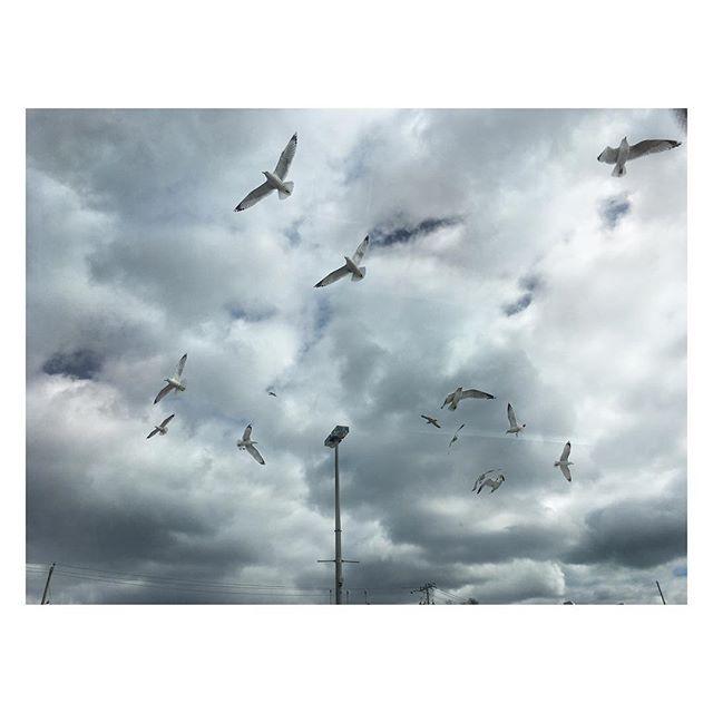 Flock. #winterwalkingwithbaby