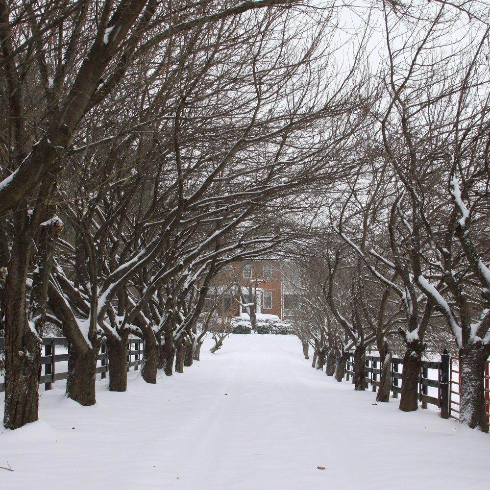 Winter Driveway 2.jpg