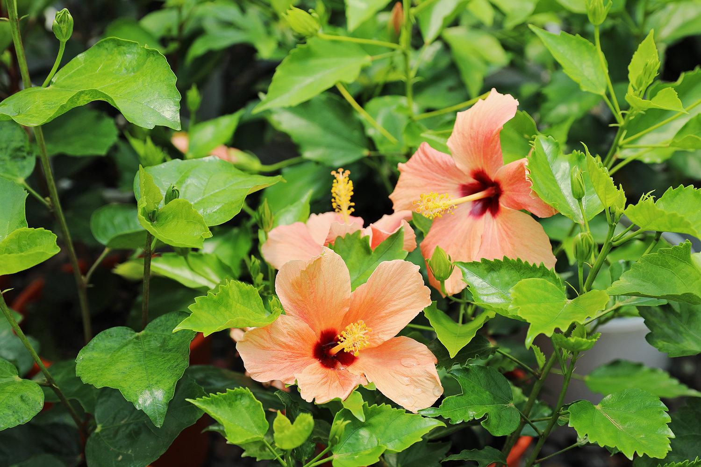 Glendale Select Plants