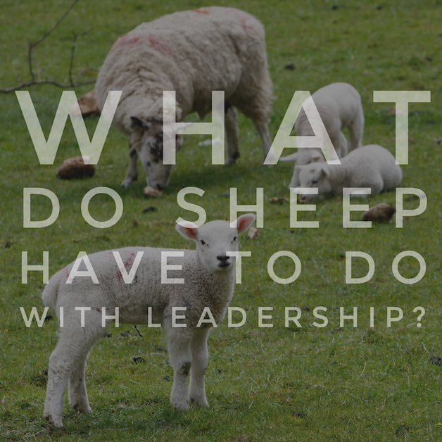 What Do Sheep Have to Do with Leadership - Image.png