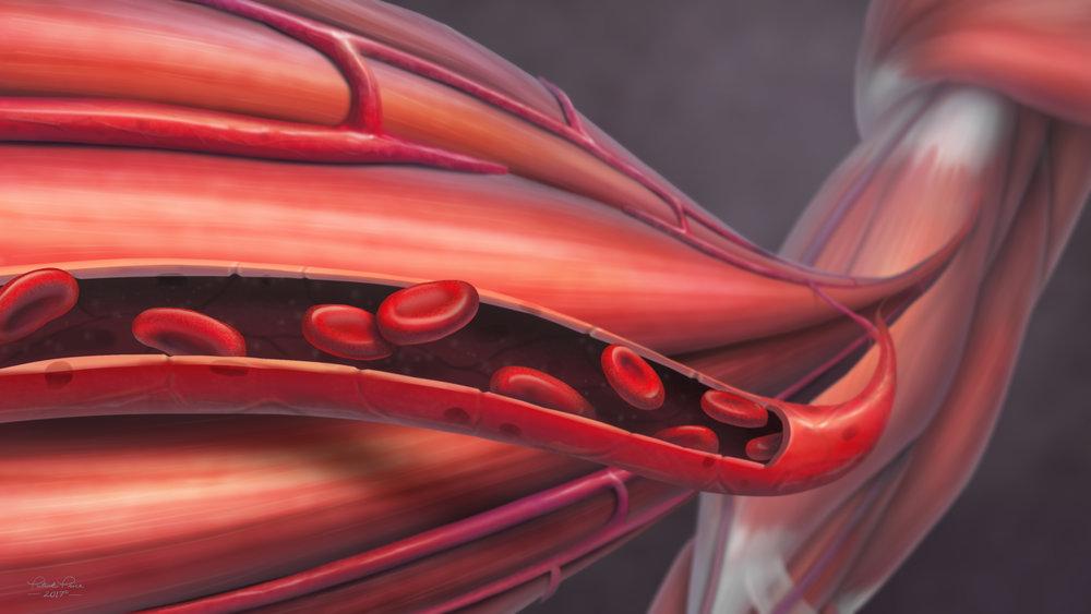 Muscle fibers for book.jpg