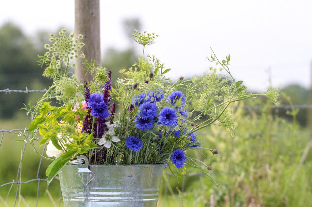 bucket with cornflowers nigella ammi majus.jpeg