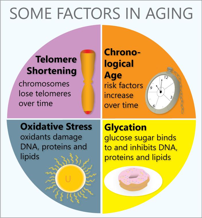 factors_in_aging.png