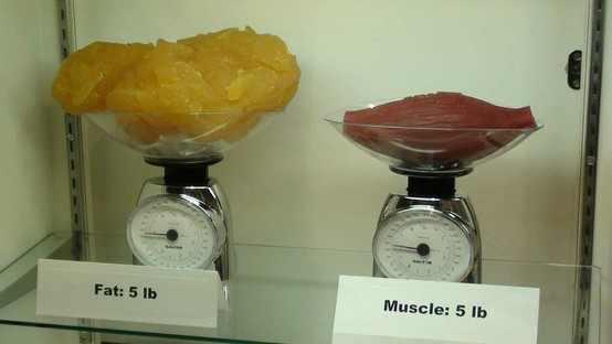 muscle-vs-fat.jpg