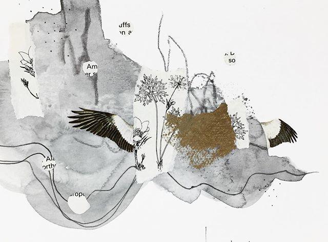 In the early morning there is  silence, shadows and quiet wings. . . .  #collageartist #cutandpaste #collageart #artonpaper #yyjarts #birds #vintageimages #miniart #quietwings #kolajmagazine #handcutcollage #abstractcollage #earlymorning #collagear #jessadupuisart #femaleartist #pnwartist #originalart #artprocess #mixedmedia #edinburghcollagecollective #collagecollectiveco #yyj #vancouverislandartist #dailyart