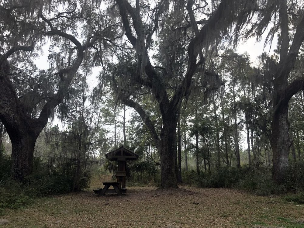 """""""Rochelle's Trio of Trees Witness To History"""" - ByKristen Altus, March 7, 2019"""