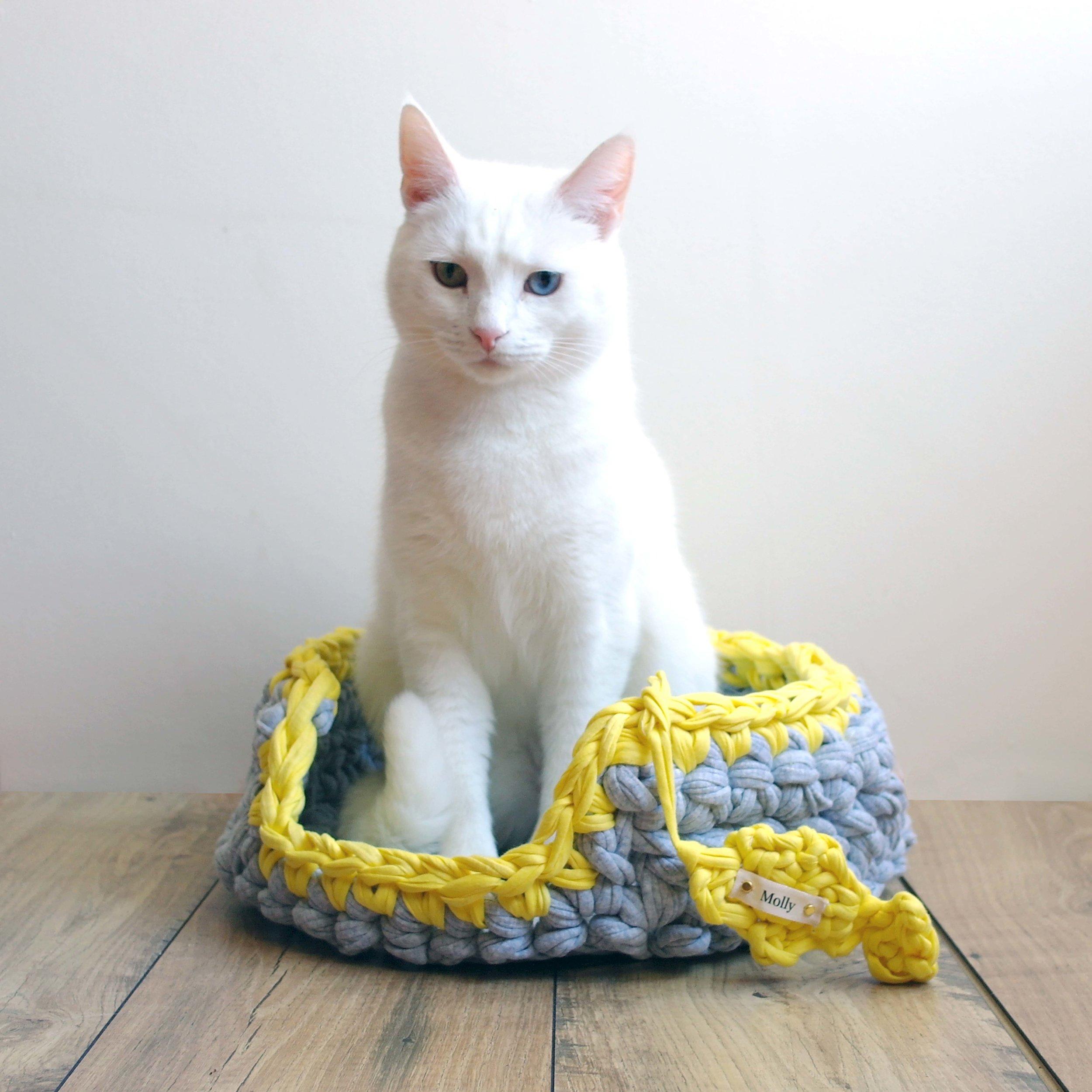 Grey Yellow and White Cat Better