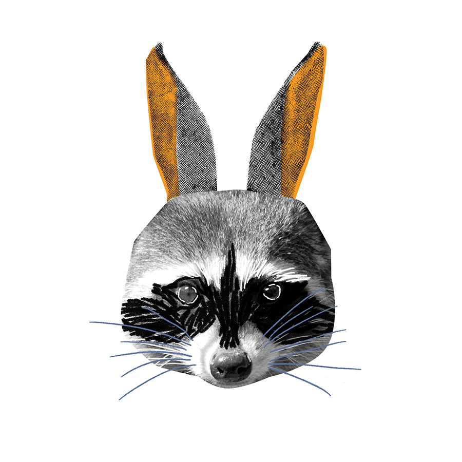 Rabbit Raccoon