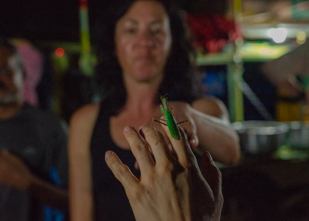 Jen receives a guest in camp, we passed the carnivorous praying mantis around, although harmless to us the insect did start many interesting discussions on gender roles and wildlife.