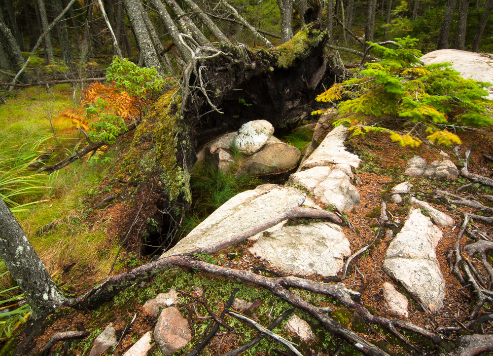 Forest Upheaval