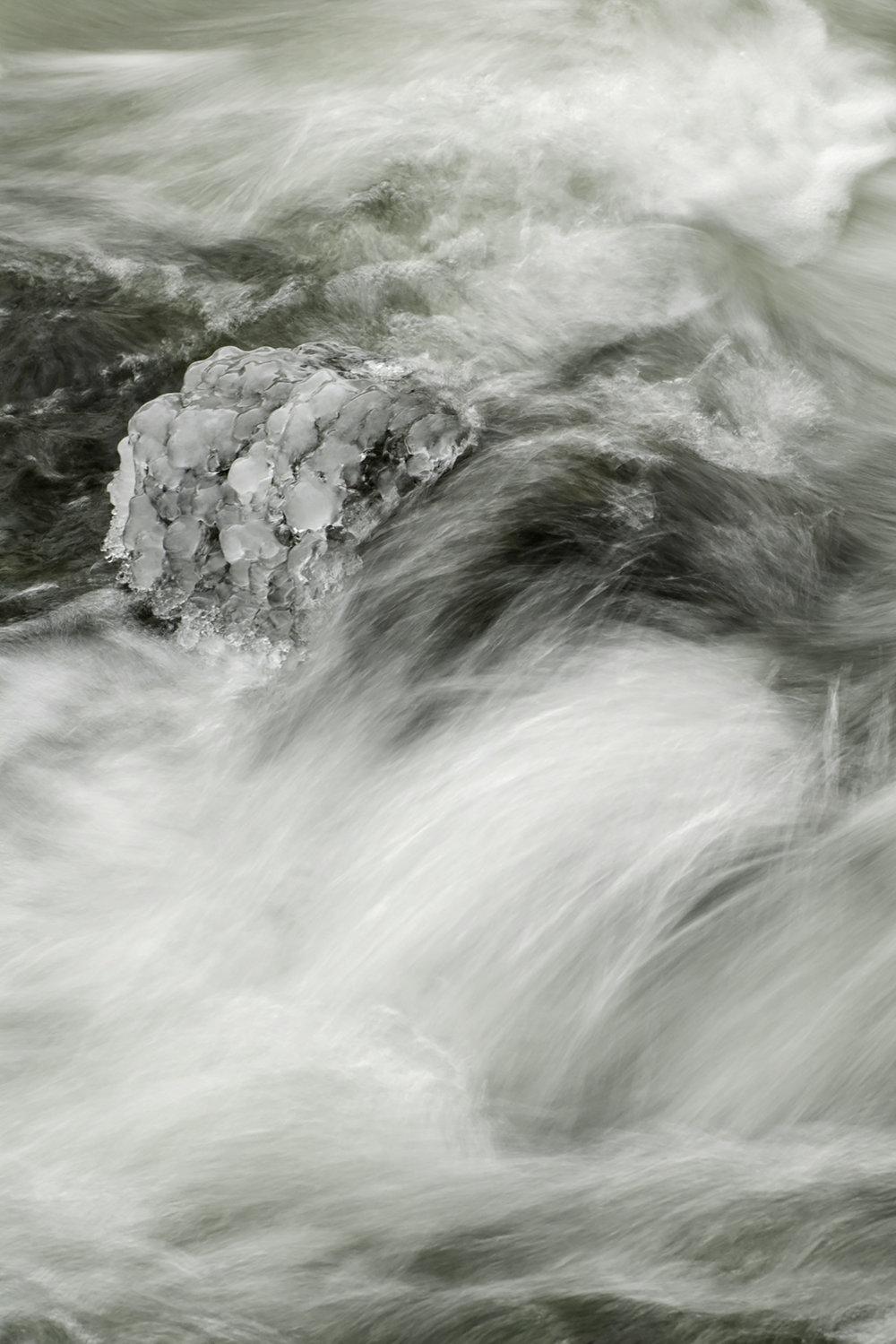 Snow Hydrangea