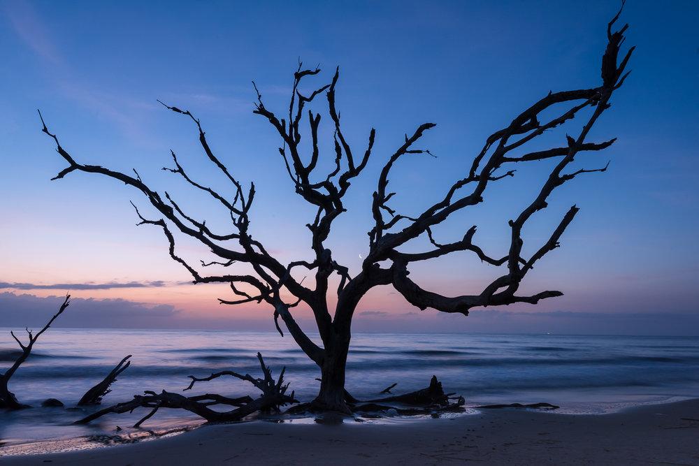 Moon, Driftwood Beach
