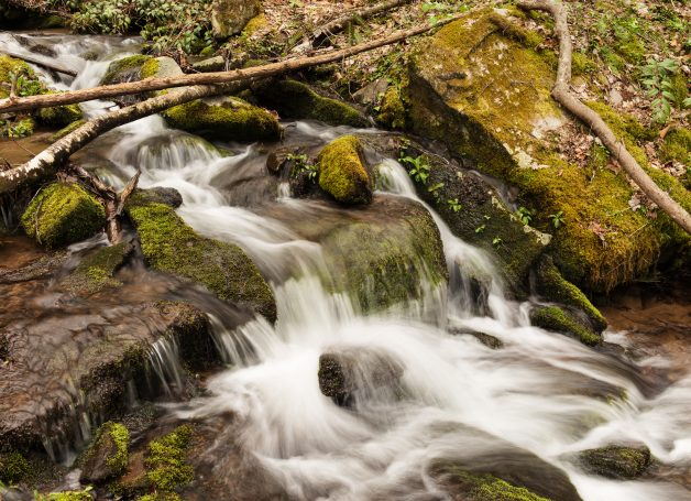 Stream in Spring GSMNP