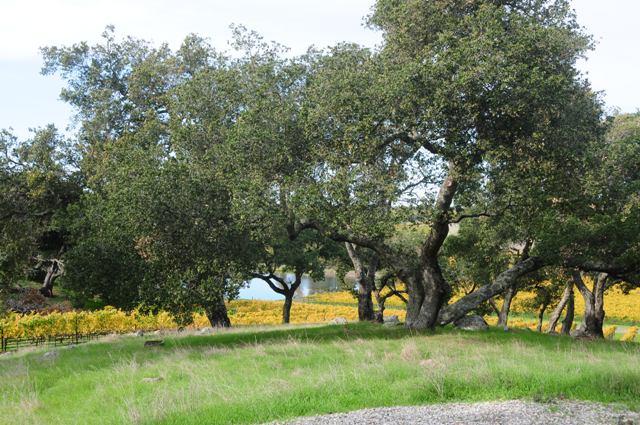 12.42 acres 4.jpg
