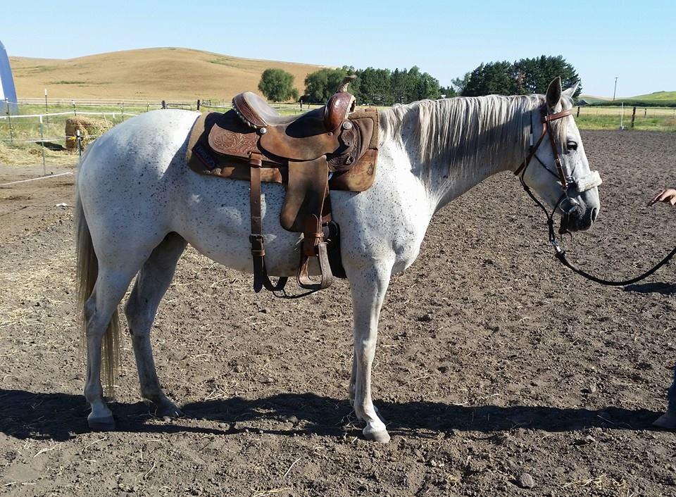 Karat.under.saddle.jpg