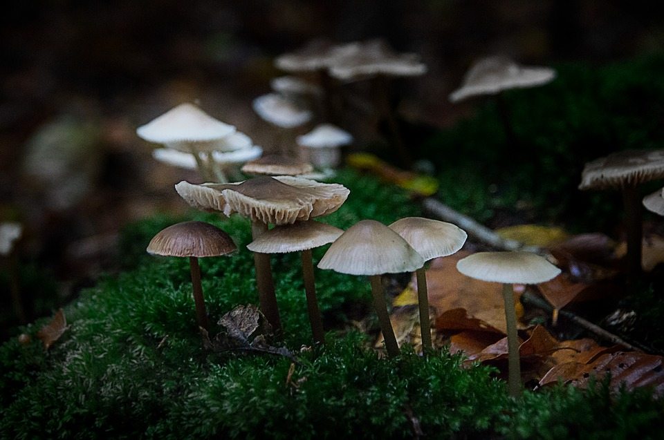 Future Health Markets - Medicinal mushrooms and fungi are thought to possess approximately 130 medicinal functions.