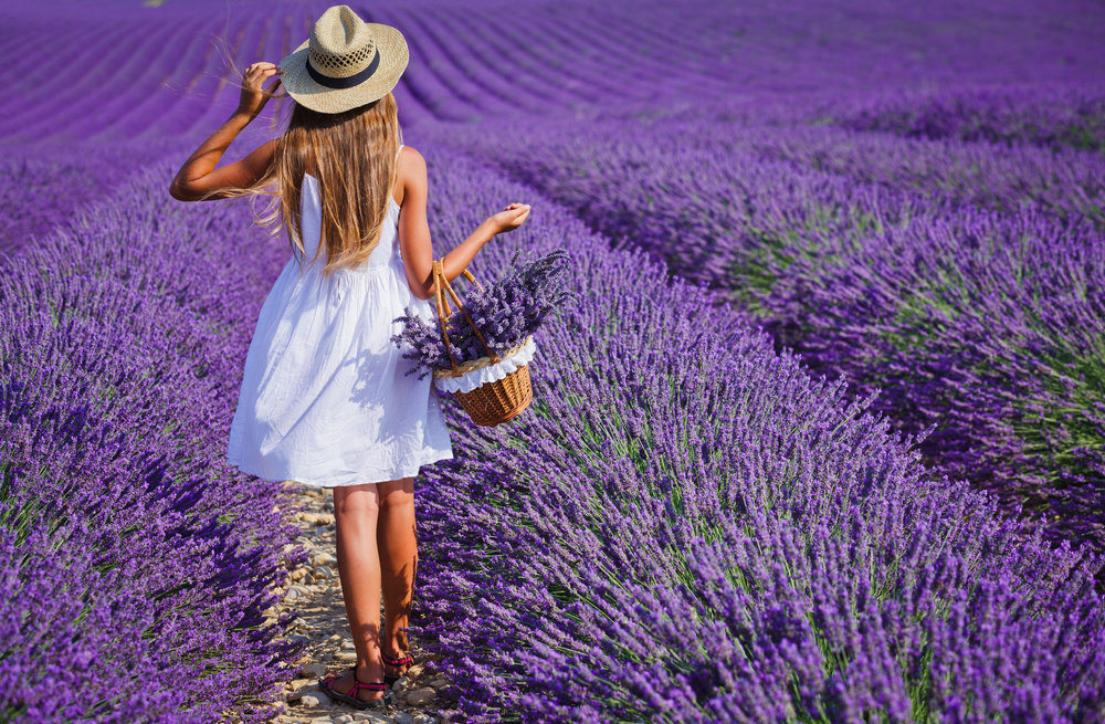 54892683-back-view-of-beautiful-young-girl-in-hat-with-basket-in-the-lavander-fields-in-valensole-provence-fr.jpg