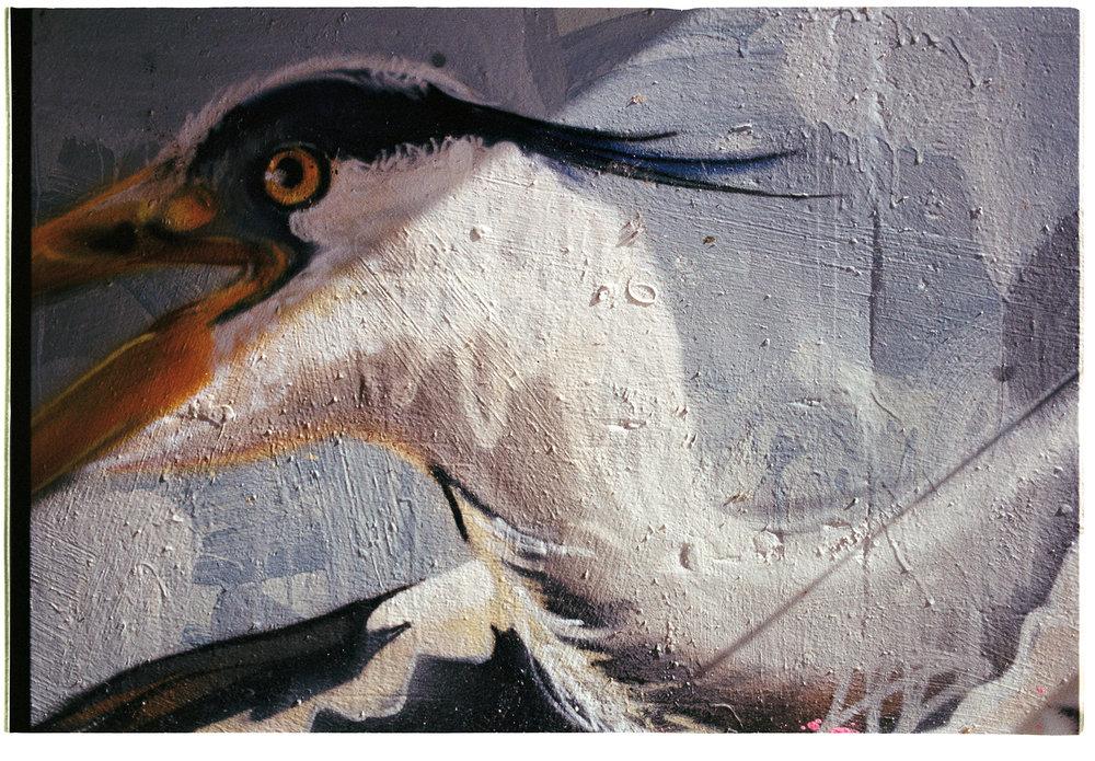 CRAIN BIRD RIVER LEA