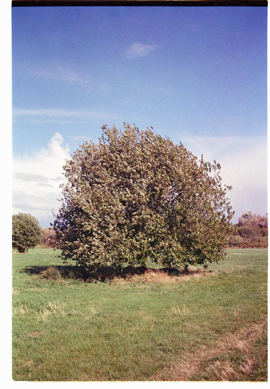 Clapton Marsh trees