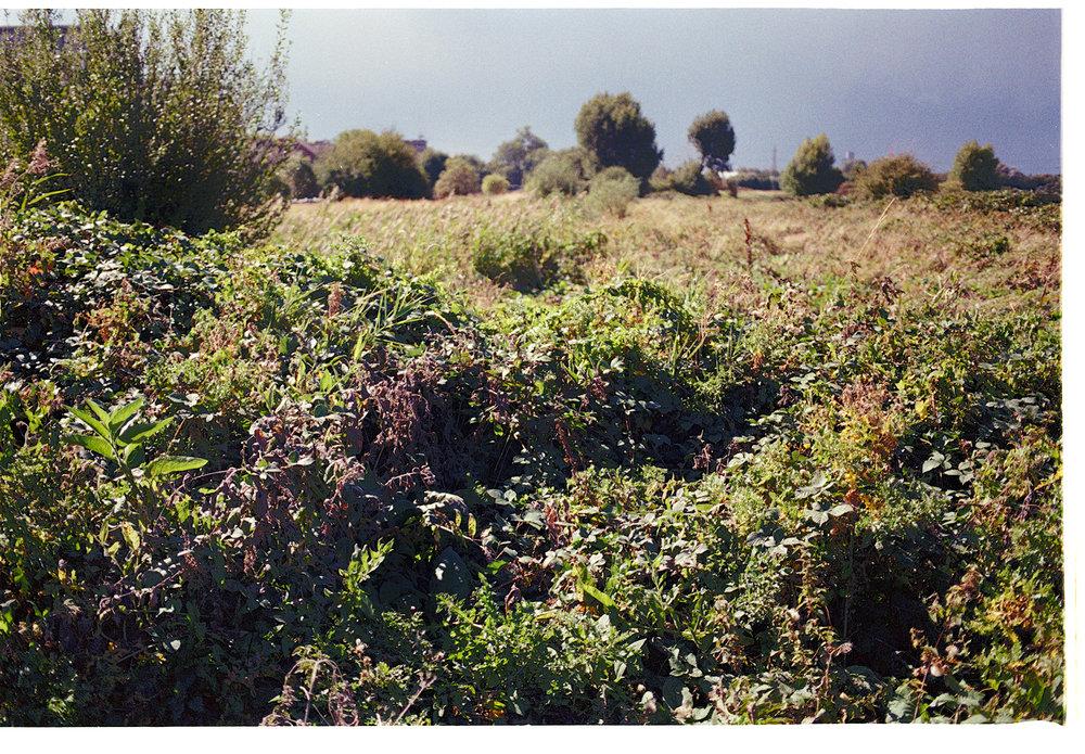 clapton marsh 2 (8).jpg