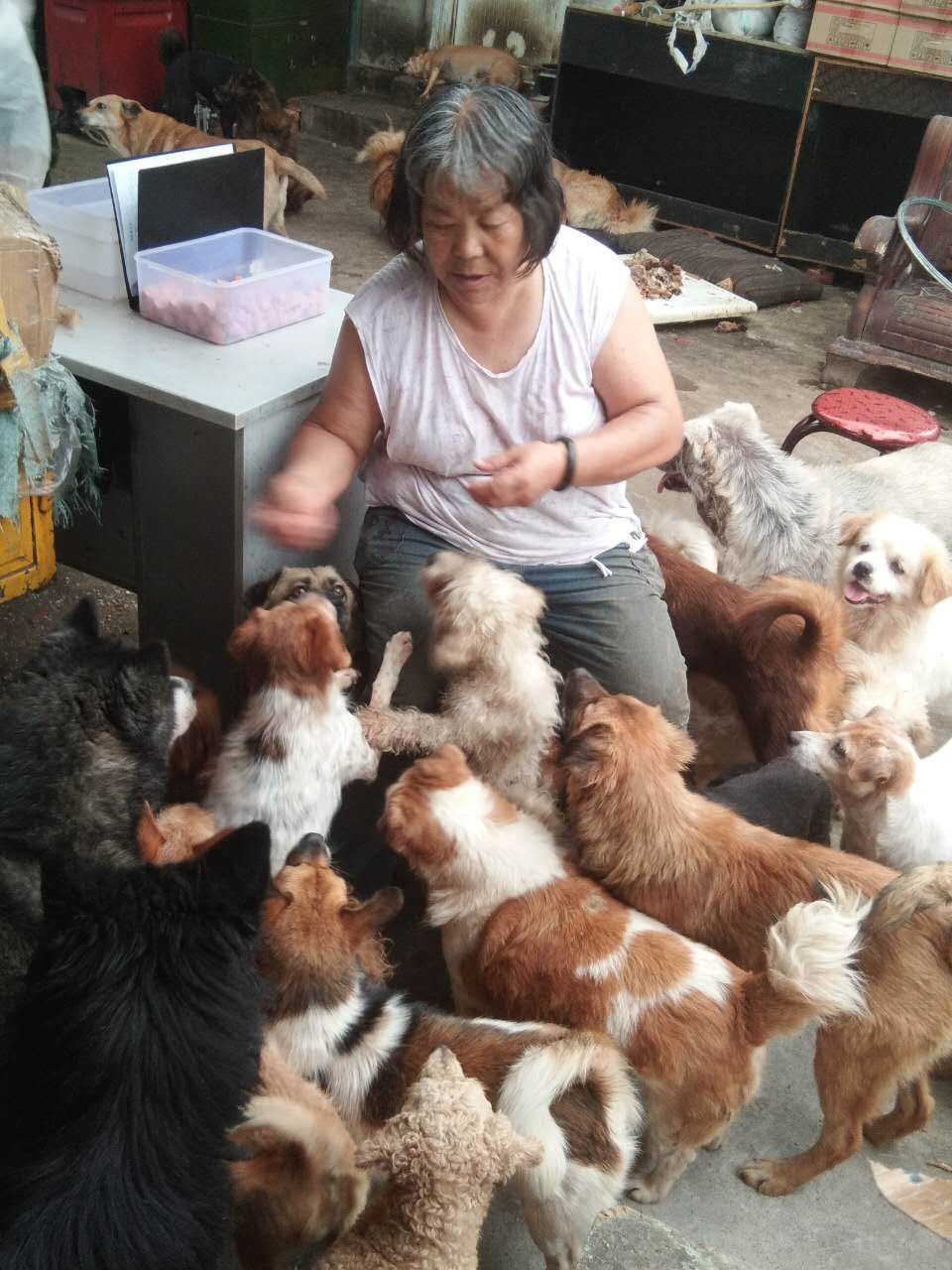 Lijun and her dogs.