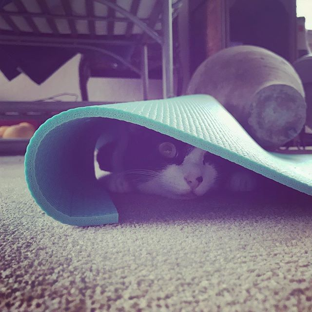 at least somebody is using the yoga mat 🧘♀️ . . . #yogacat #yoga #cat #kitty #oneeyedcat #noodlethecat