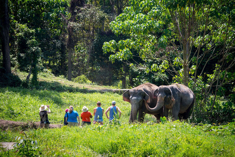 PHUKET'S FIRST ETHICAL ELEPHANT SANCTUARY    -    Phuket Elephant Sanctuary    is a home for retired working elephants, set on 30 acres of lush tropical jungle. Observe how elephants rehabilitate into forest life after decades of abuse, and experience how incredible the largest land mammal on earth is during a day at the sanctuary.