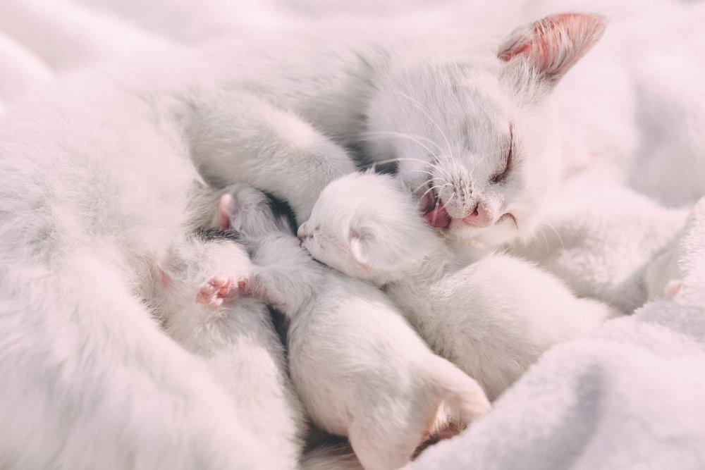 animal-blur-cat-412463.jpg