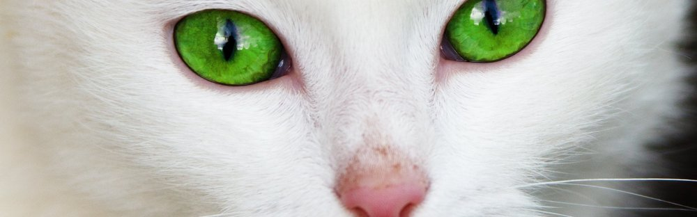 animal-cat-close-up-87413.jpg