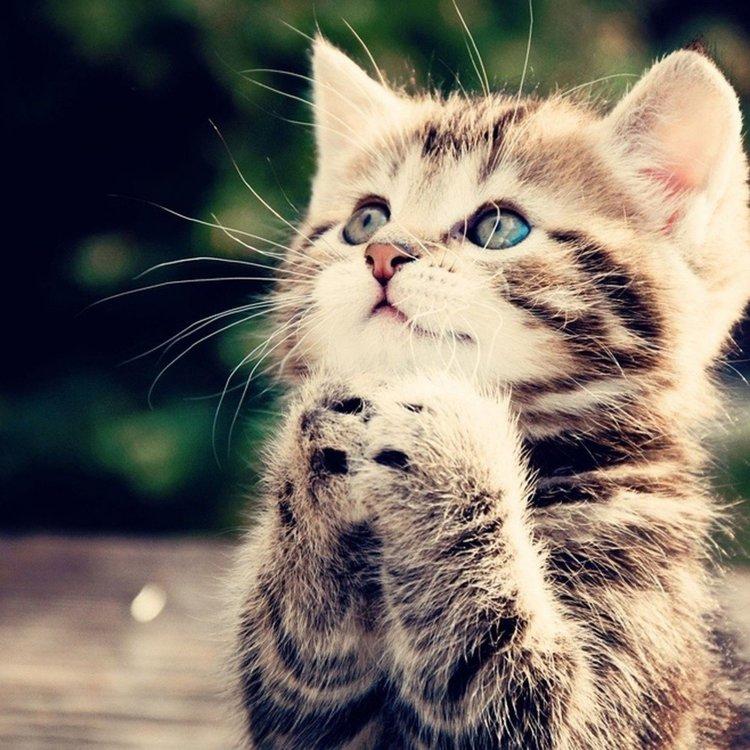 begging+cat (1).jpg
