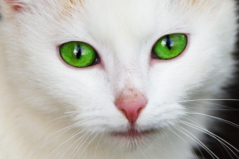 animal-cat-close-up-87413.jpg