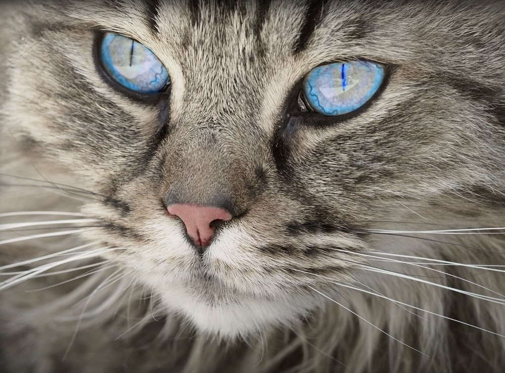 cat-close-up-cute-122437.jpg