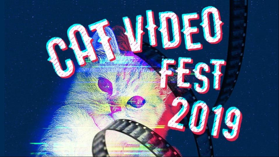 Cat Video Fest Banner Image.png