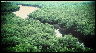 Sundarbans still haven for pirates - by Asaduzzaman SatkhiraPublished at 04:07 am November 13th, 2016Around 1.5 million people, mainly fishermen, honey collectors and wood-collectors and Bawalis, depend on the resources of world's largest mangrove forest Sundarbans for their livelihood are in great danger as at least 12 pirate gangs are still active in the area and controlling the Sundarbans. Local fishermen and others alleged that they are suffering as after surrendering of Master Bahini and Mojnu Bahini, other pirate gangs beco . …READ MORE