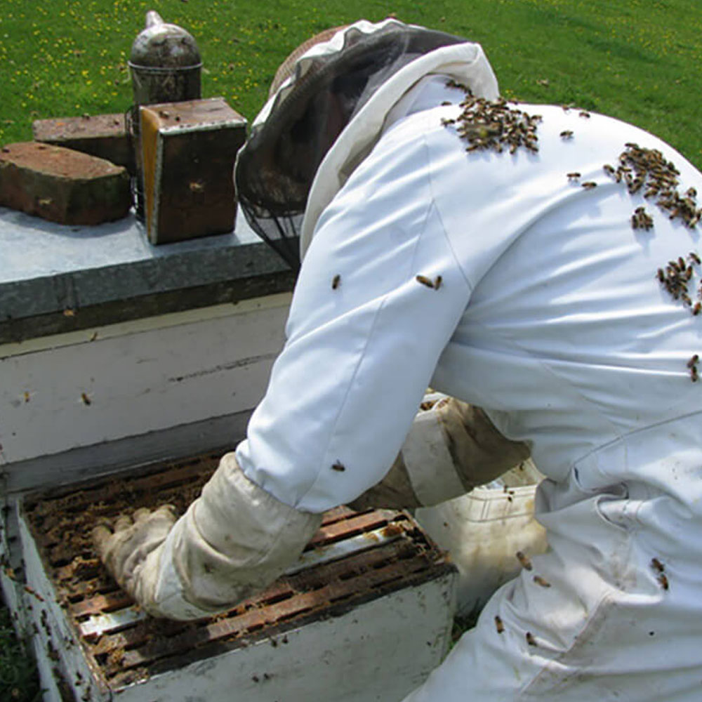 Bryon working with a hive