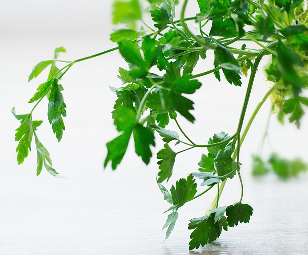 Parsley - Flat-leafed