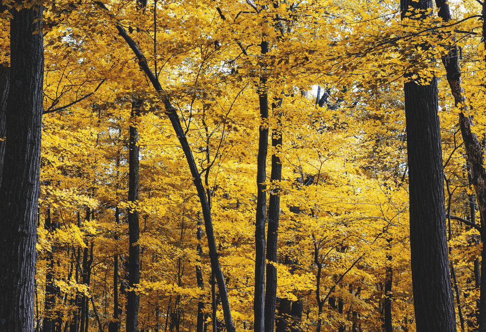 Autumn001